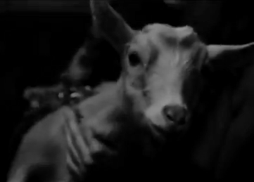 "A baby goat looks at the camera in ""Decisions"" by Borgore feat. Miley Cyrus; he is held, presumably, by Elle Evans."